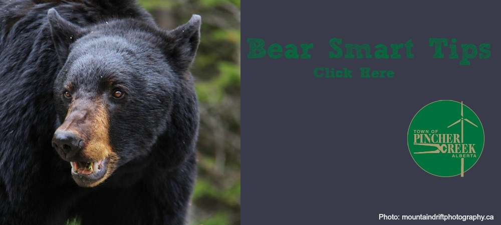 Click here for tips on how to be bear smart in our community!